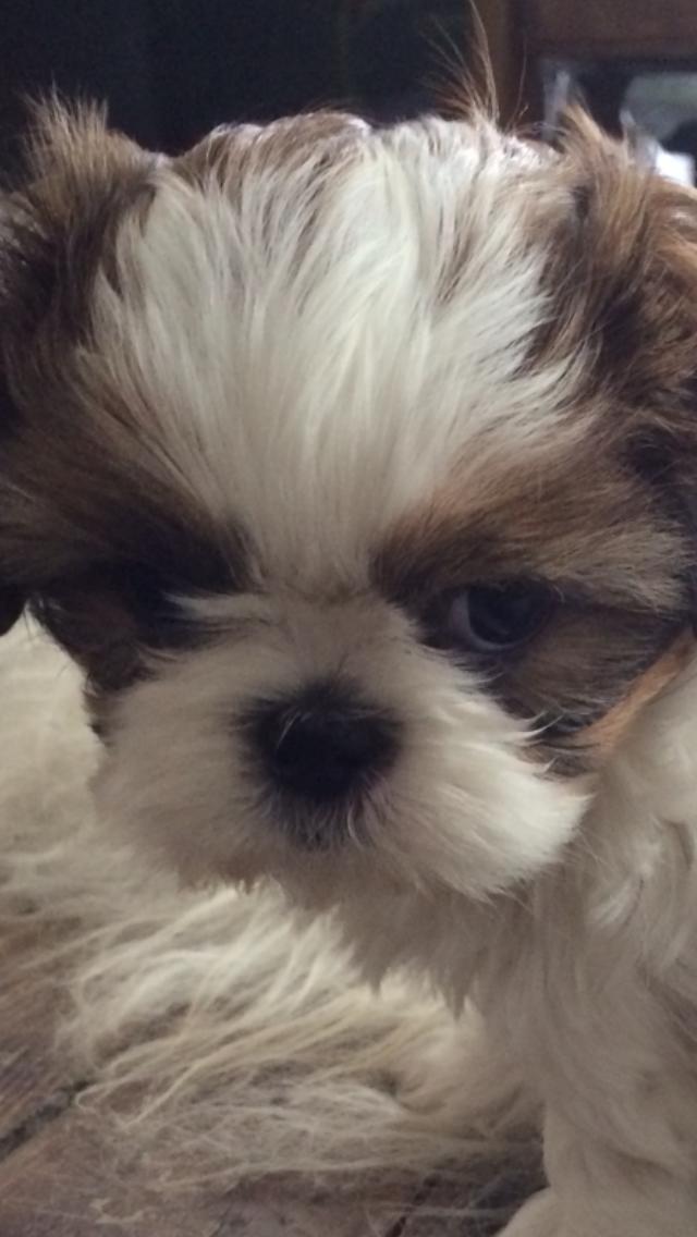Puppy love. Molly Loo Hoo 2014 3114