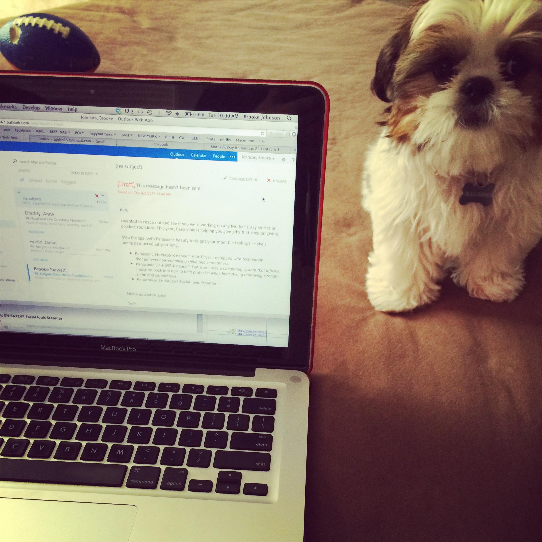 Puppy love. Molly Loo Hoo 2014 4556