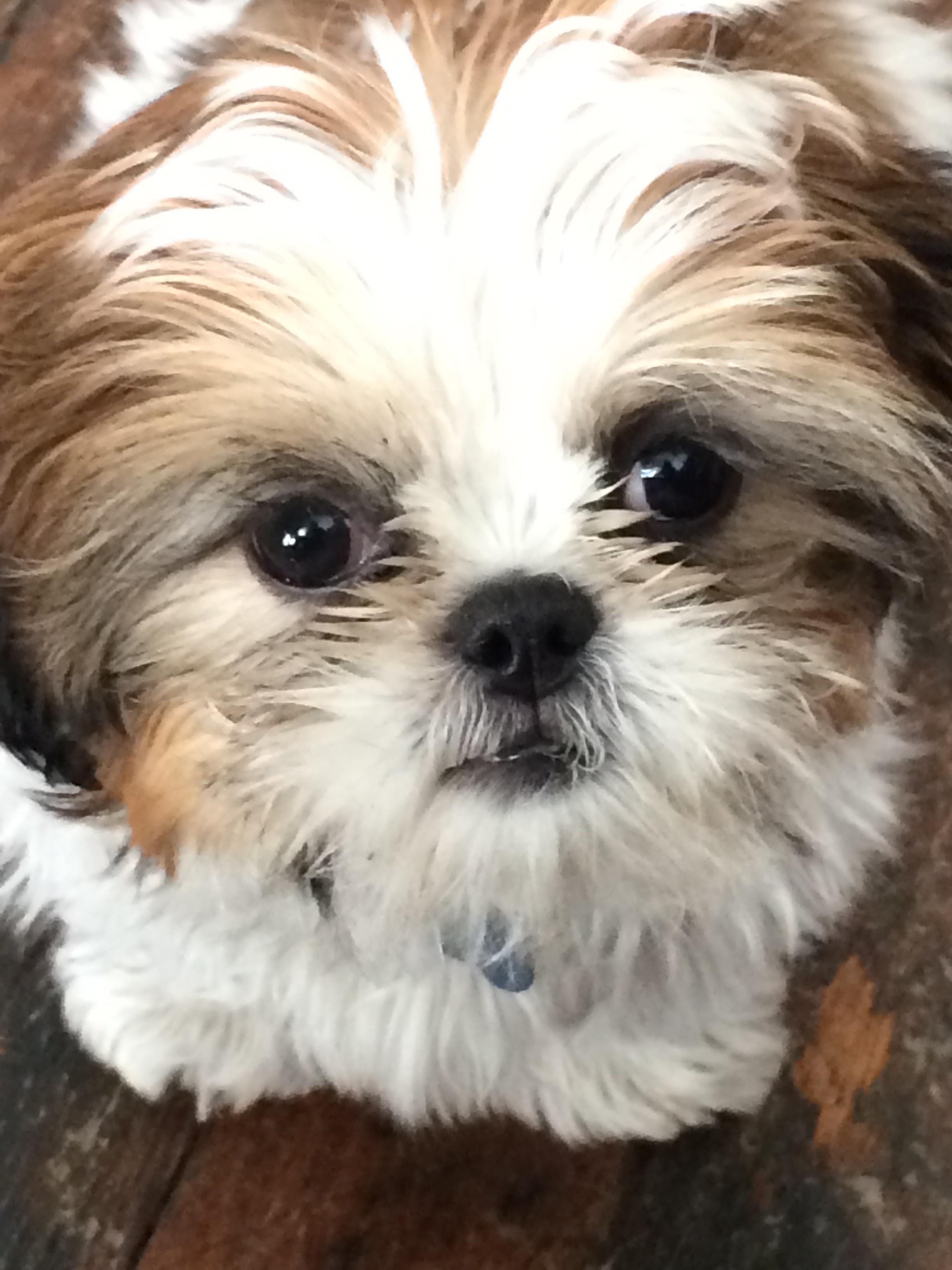 Puppy love. Molly Loo Hoo 2014 4667
