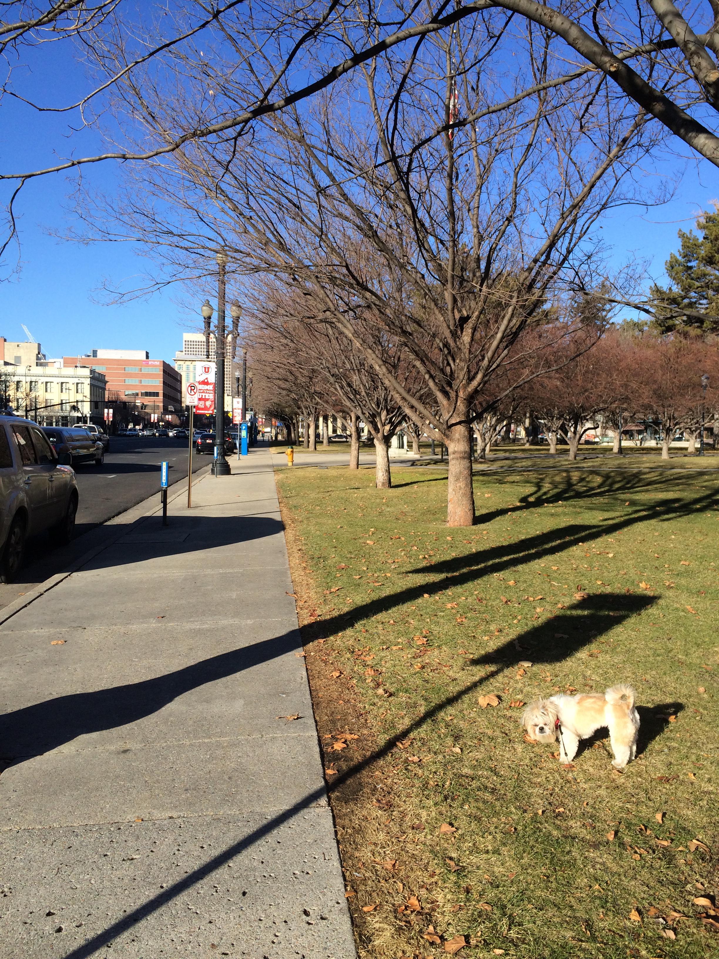 Saturday Summer in January 17, 2015 712