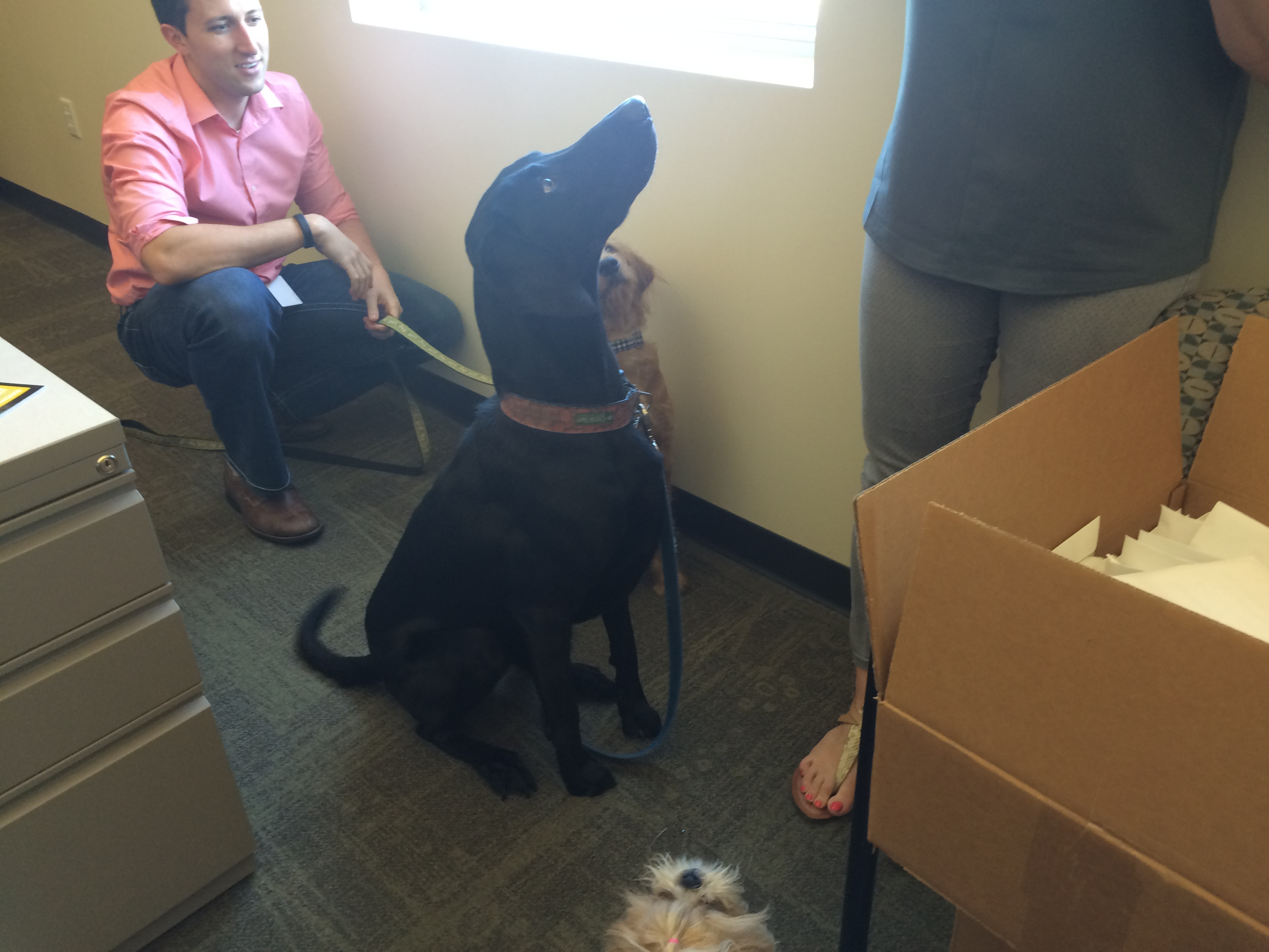 Bring your dog to work day! August 27, 2015450