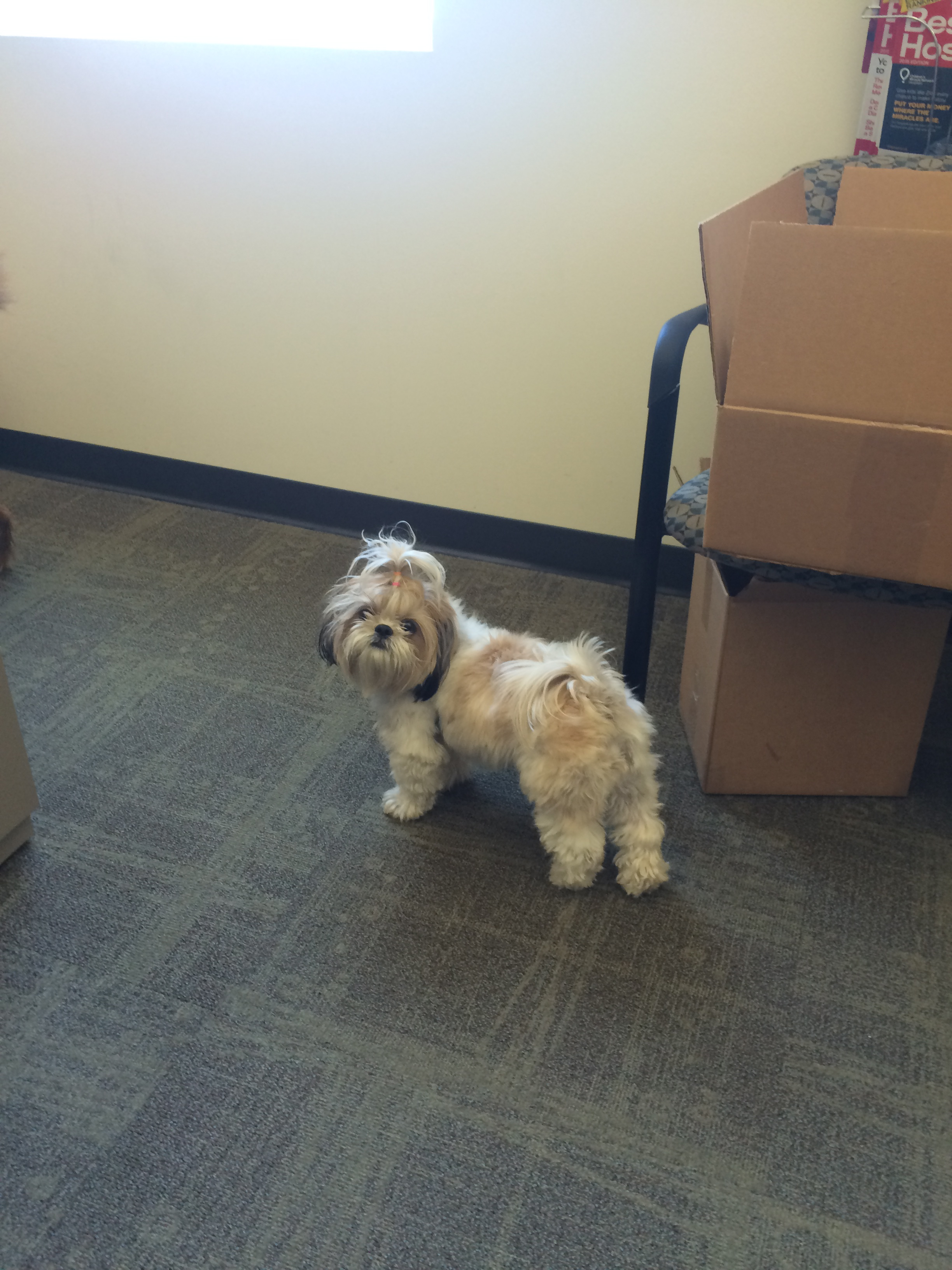 Bring your dog to work day! August 27, 2015462