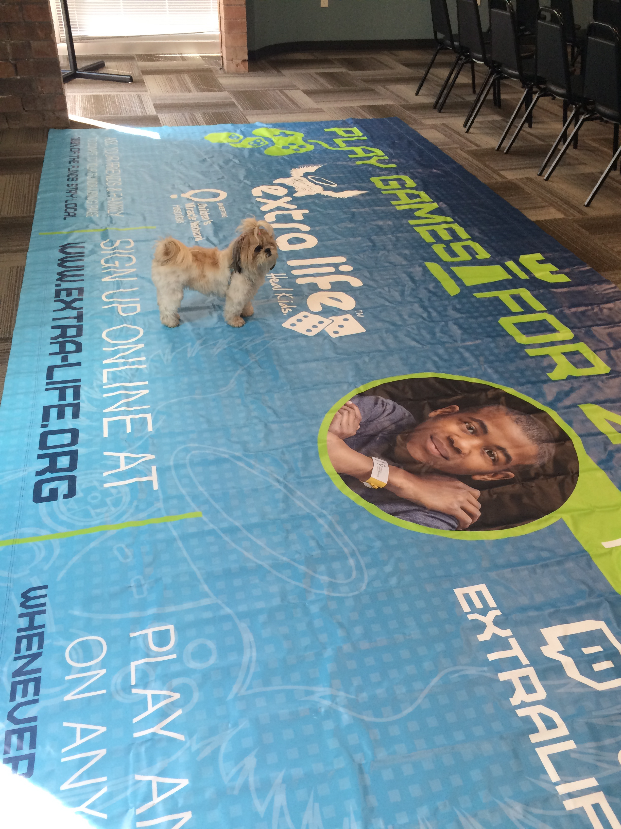 Bring your dog to work day! August 27, 2015476