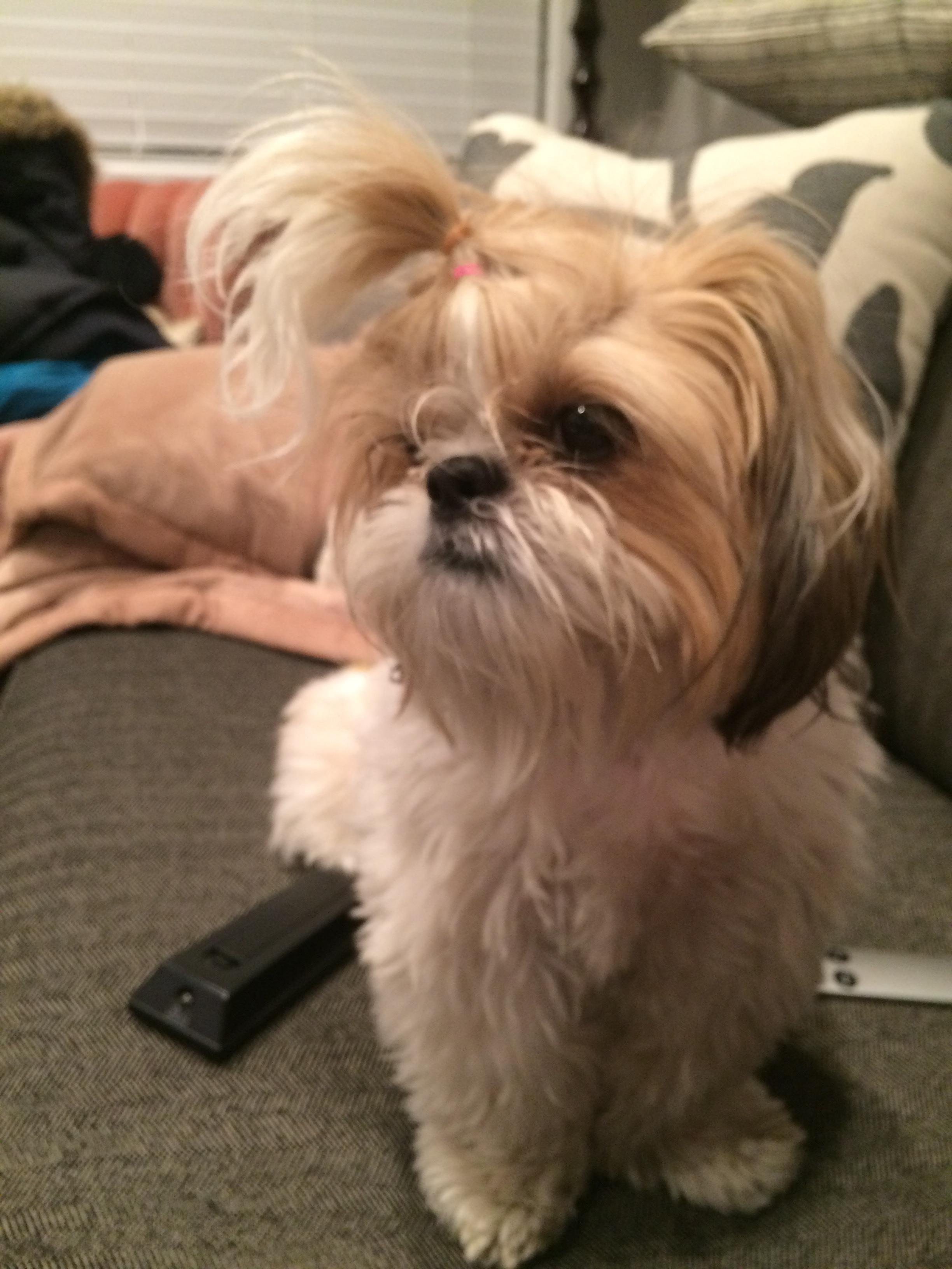 puppy love. Nov. 17, 2015 523