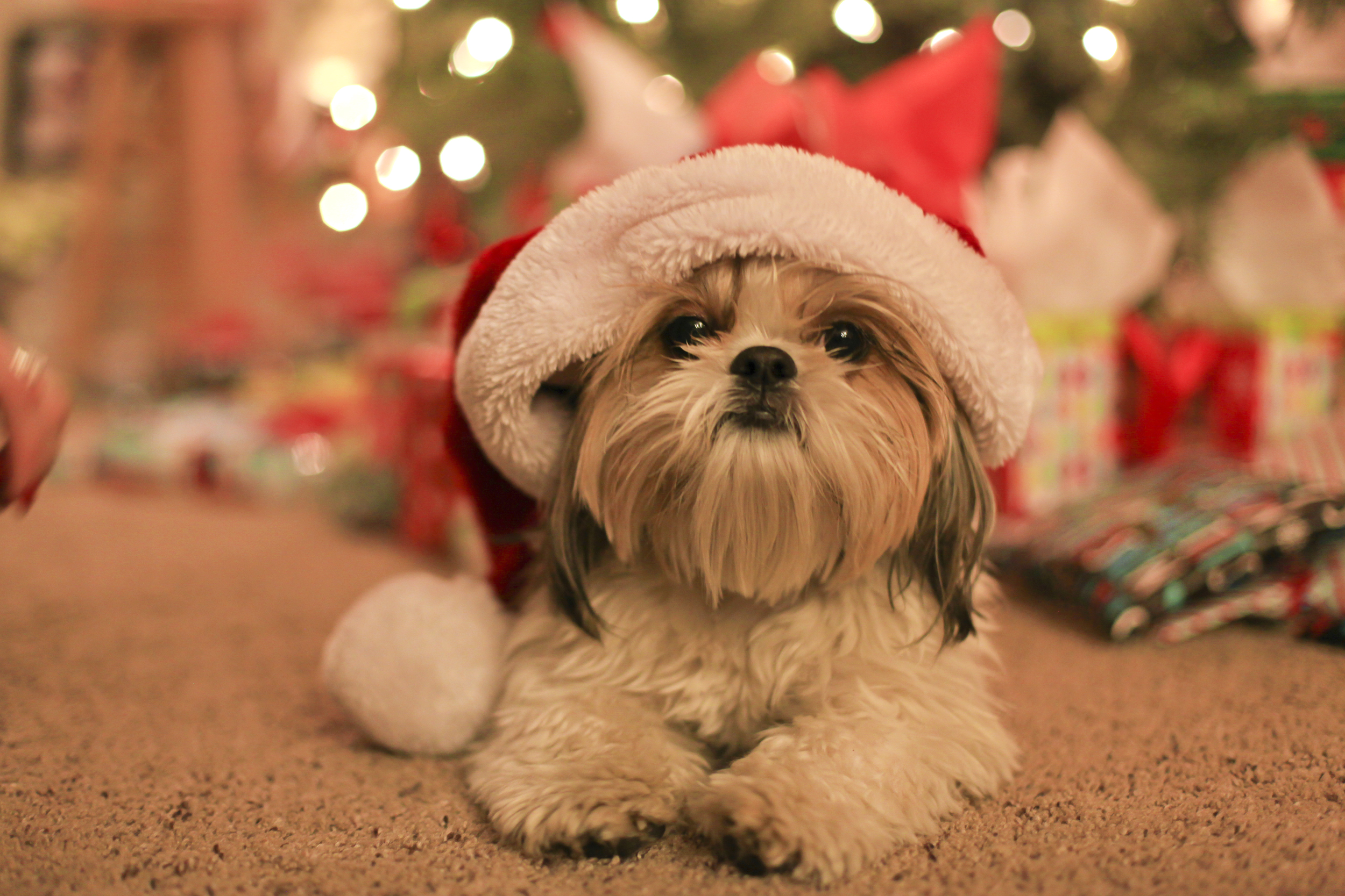 Christmas Eve. December 24, 2015 2664
