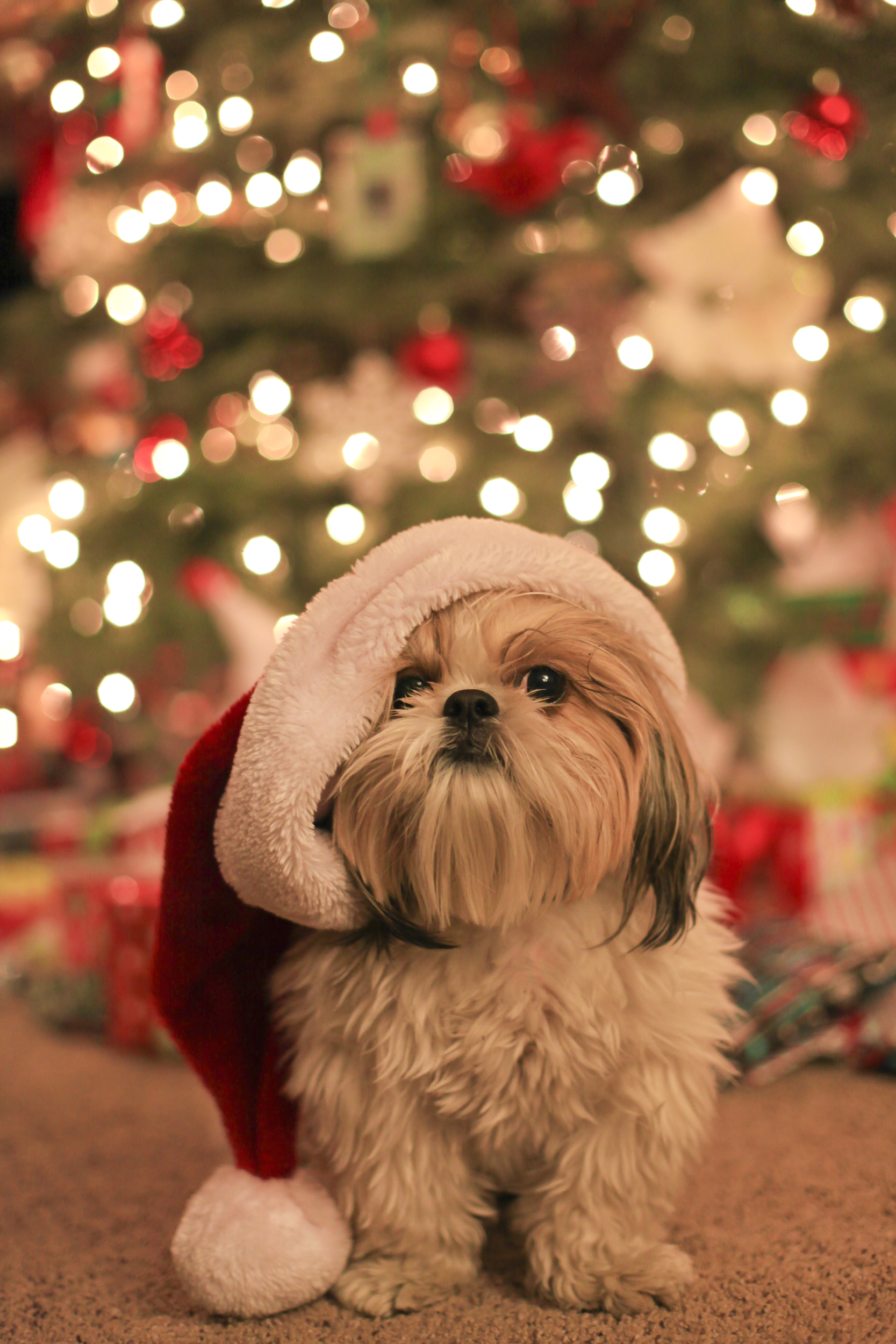 Christmas Eve. December 24, 2015 2665