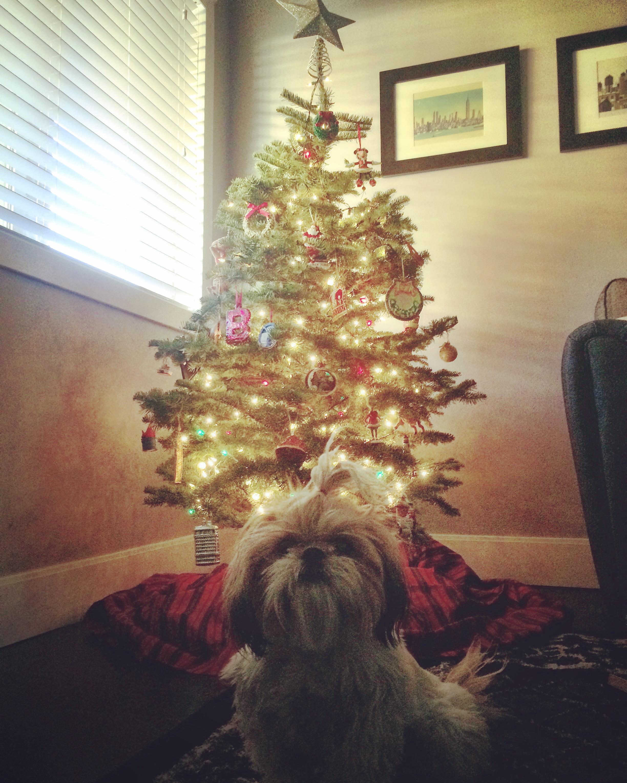 Oh Christmas Tree, Oh Christmas Tree Dec. 6, 2015 910