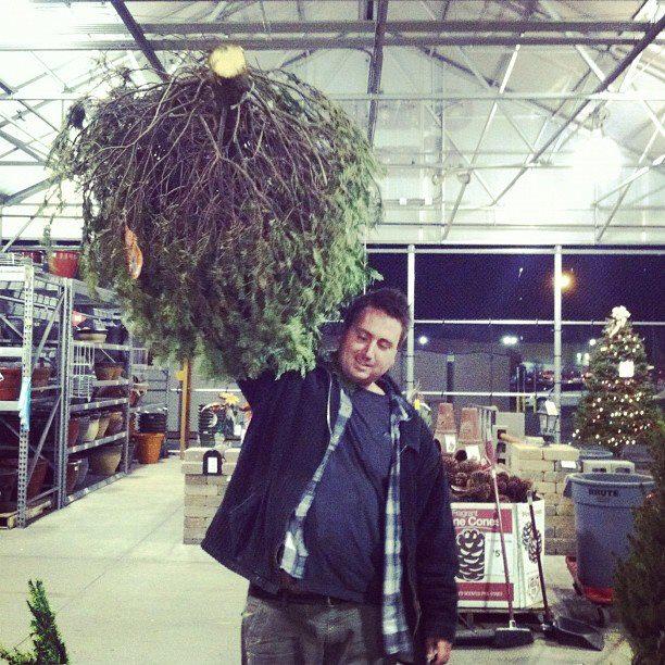Oh-Christmas-Treeeee